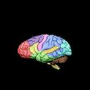3D Brainy